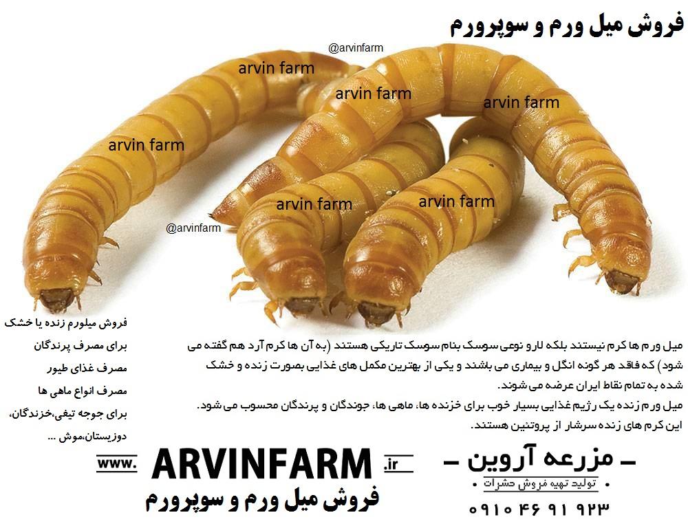 مزرعه آروین ( www.ArvinFarm.ir | فروش حشرات | فروش میلورم ؛ خرید میل ورم | میل ورم قزوین | میل ورم تهران | خریدار میل ورم | کرم میلورم