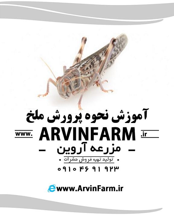 انواع ملخ | پرورش ملخ | مزرعه ملخ | پرورش ملخ صنعتی | سالن تولید ملخ خوراکی